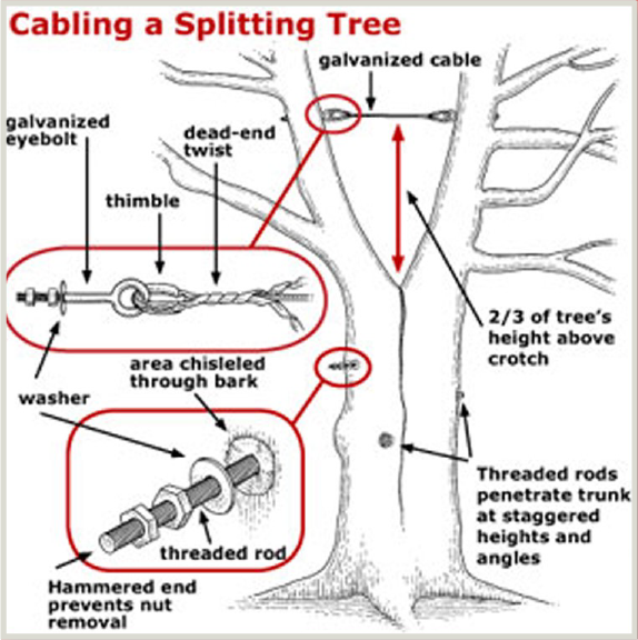 Tree Pruning Amp Cabling Owen S Tree Amp Shrub Care